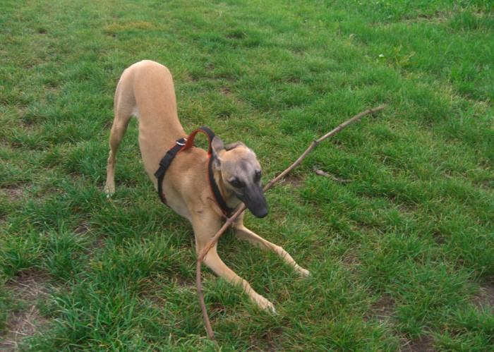 gemeldete hunde münchen